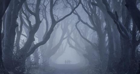Dark Hedges Experience