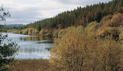 Lough Navar Forest